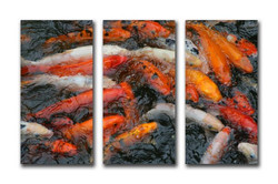 blieden-fish-photo.jpg