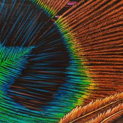 EmilyBrantley-PeacockFeather-Acrylic.jpg