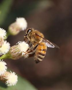 blieden-bee-photo.jpg