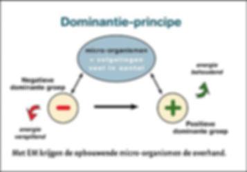 Afbeelding dominantieprincipe_0.jpg