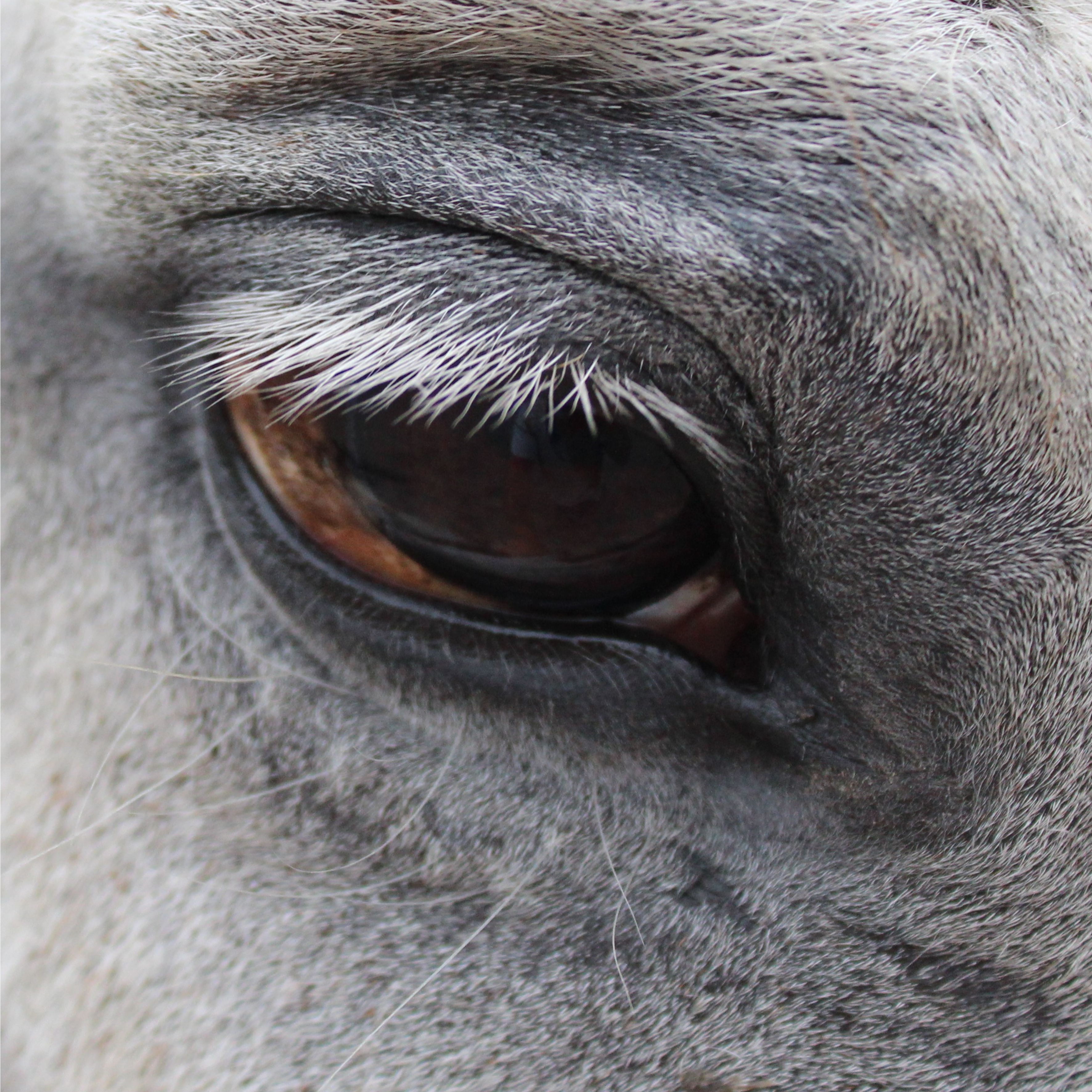 Tresor oog