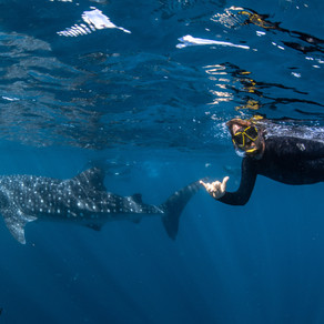 Our whale shark dive