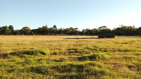 One of the large Painted Park paddocks.