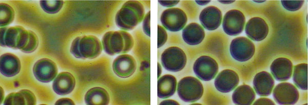 Double-Helix-Water-Blood-Cells1.jpg