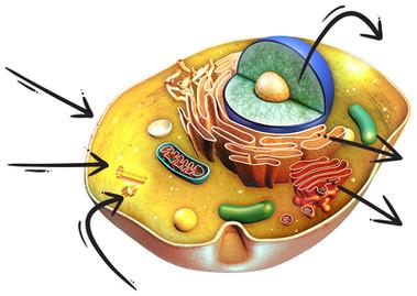 Healthy Cell.jpg