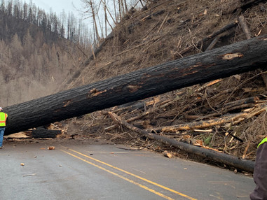 No more lives lost: 7 things to know about removing hazard trees