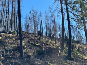 Conservative approach to hazard tree operations includes reassessing hundreds of trees