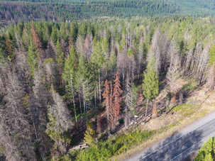 Hazard tree marking nearly complete on OR-126