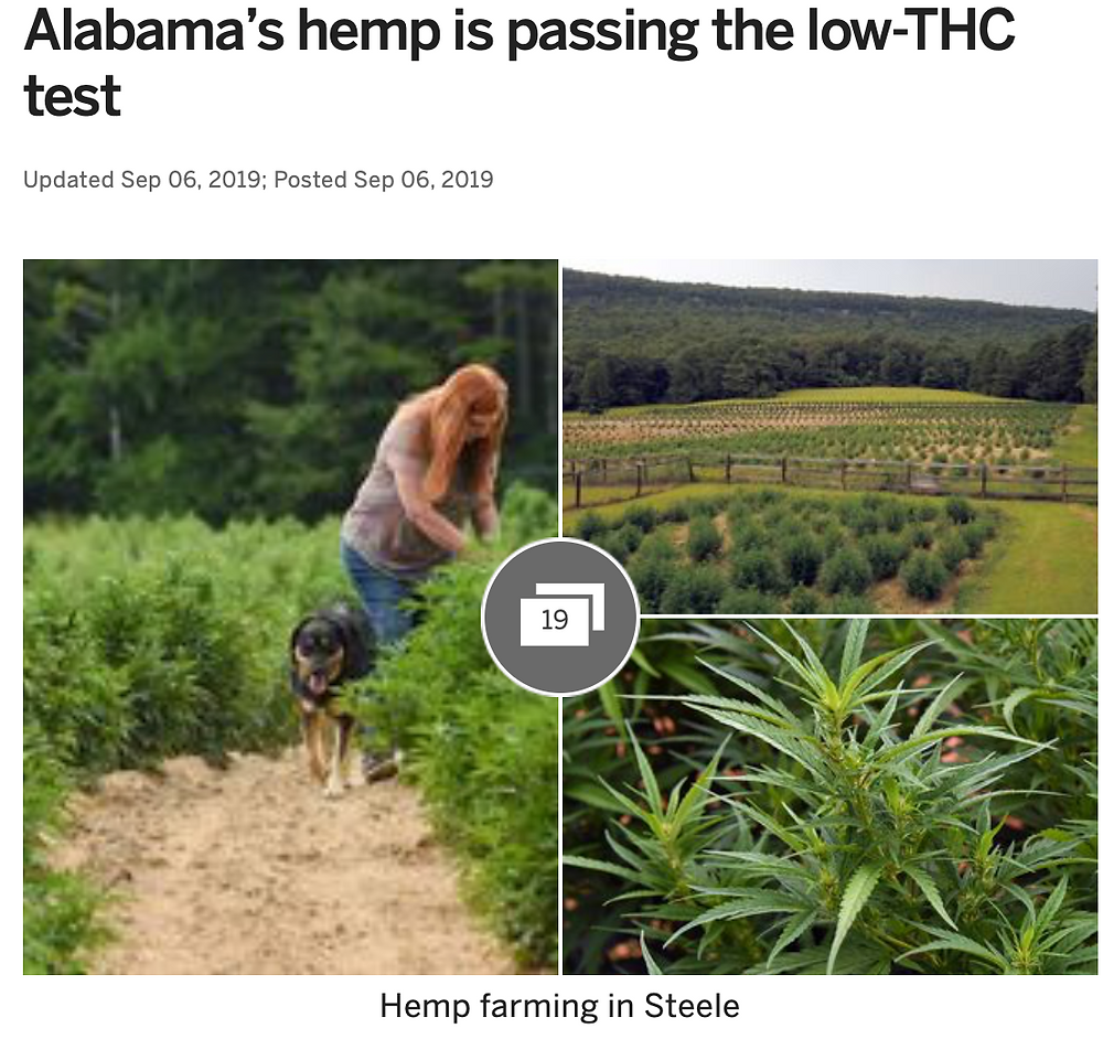 Hemp Farmes in Alabama overcoming THC content issues