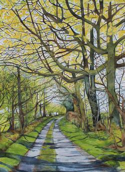 Spring on Green Lane, Quabbs, Bettws y Crwyn, South Shropshire