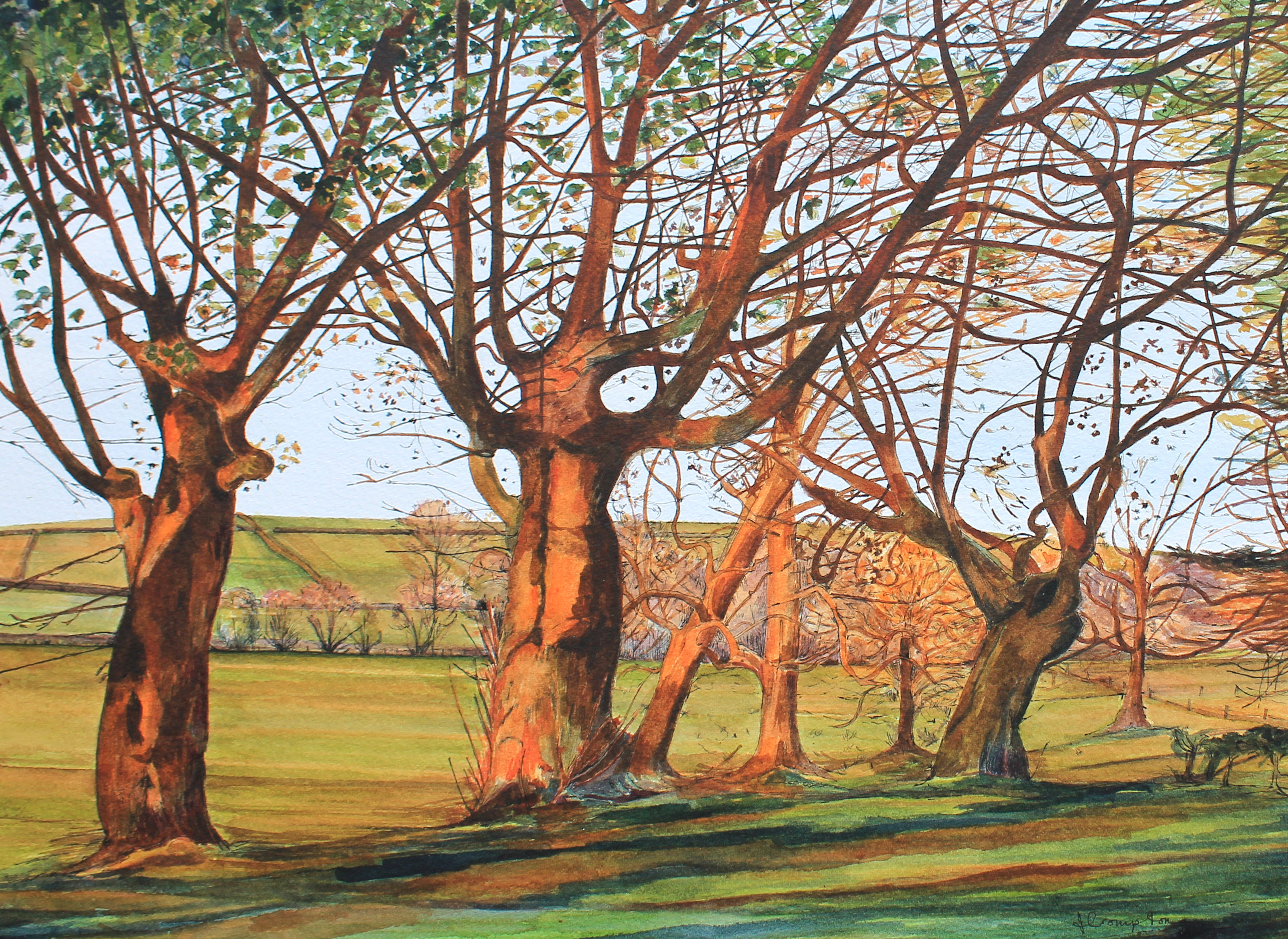 Sycamores - Early Evening