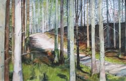 Woodland Ride