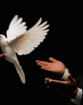 Kai's Dove Release.png