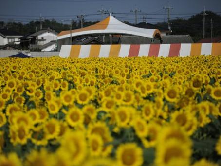 Mùa hè Nhật Bản có gì ? 日本の夏の楽しみ方