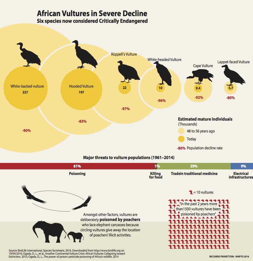 Vultures decline