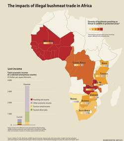 Impacts of illegal bushmeat trade