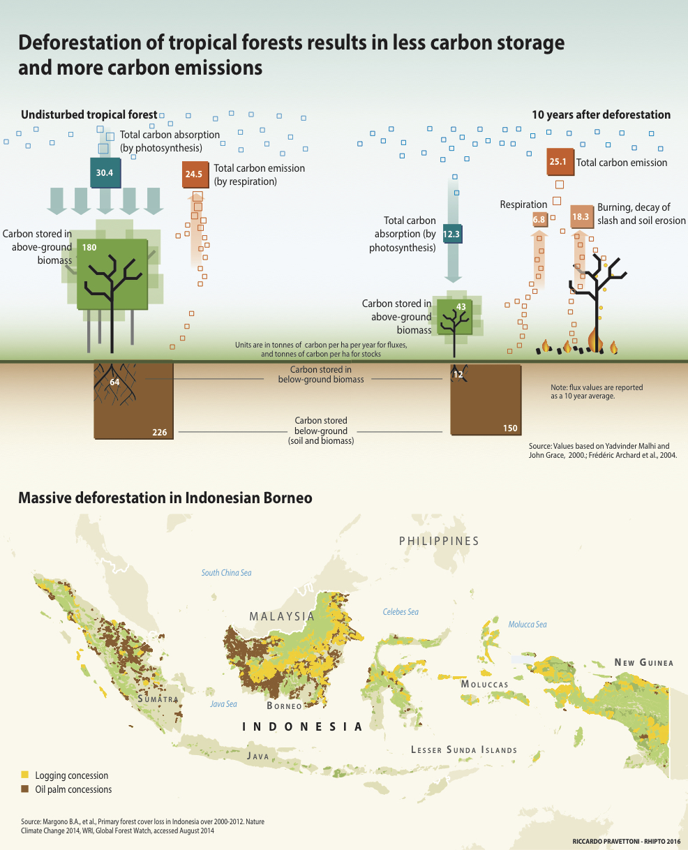 Deforestation and Carbon storage