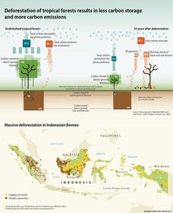 Deforestation and Carbon storage