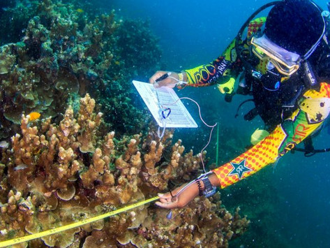 Coral Reefs in Popular Malaysian Tourist Destinations are facing Serious Threats