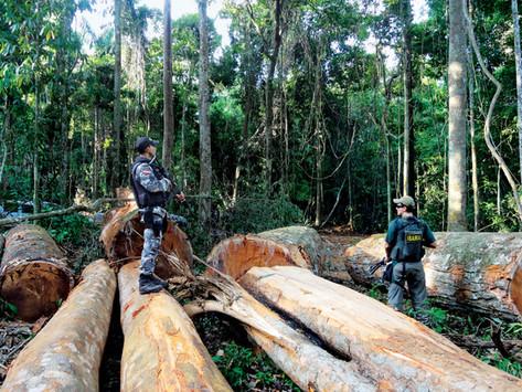 Norway pledges more money to fight deforestation worldwide