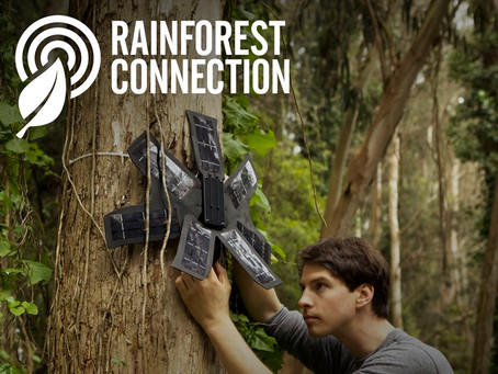 How you can use your smartphone to save the rainforest