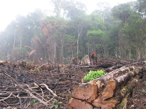 Deforestation in the Amazon is at an all-time high