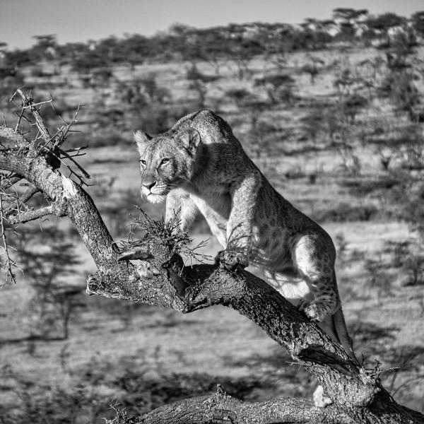 Lions View, Maasai Mara, Kenya
