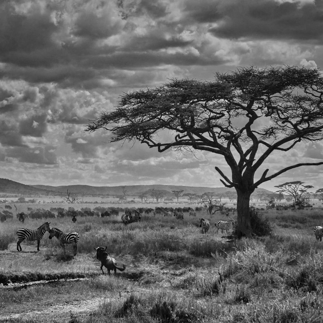 Moody plains, Serengeti, Tanzania