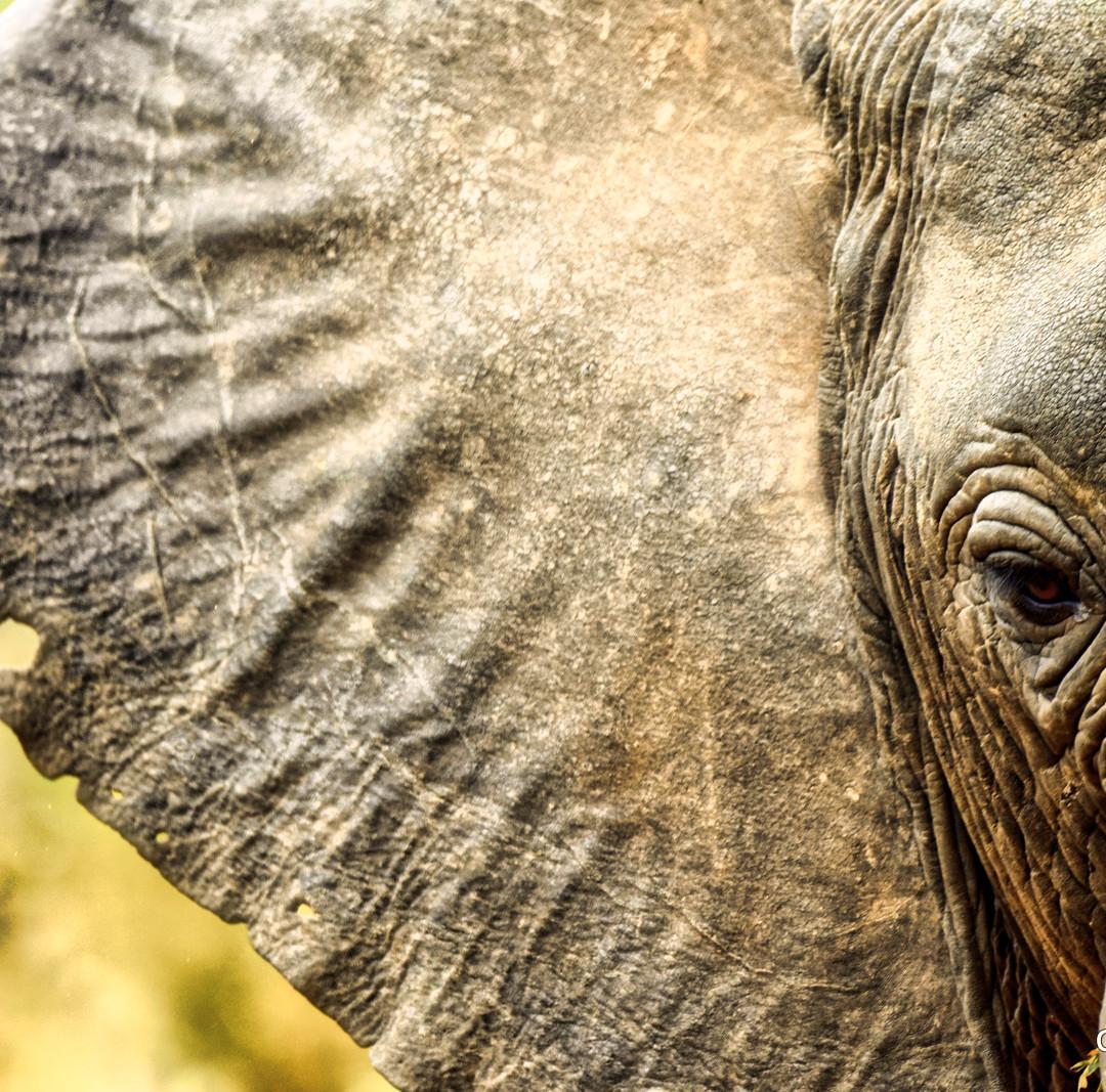 Are you listening? Elephant, Lake Manyara, Tanzania