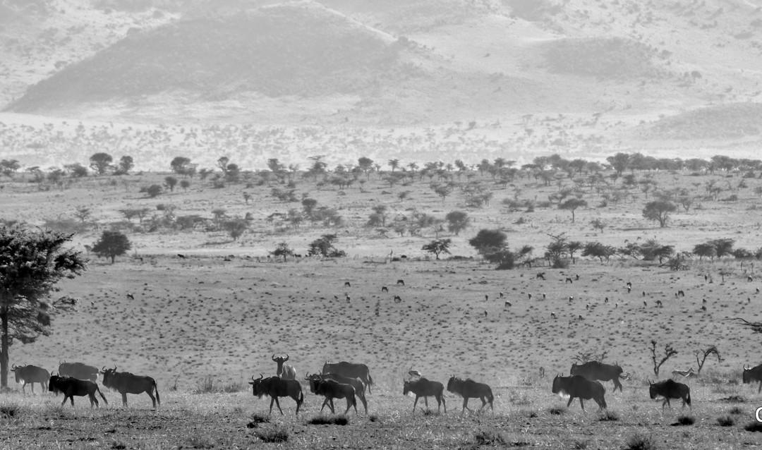 The Great Herds, Serengeti, Tanzania
