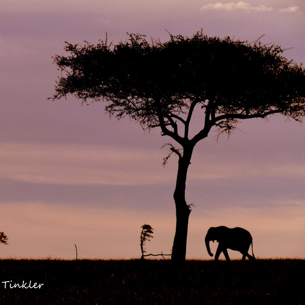 Icons of Africa, Maasai Mara, Kenya