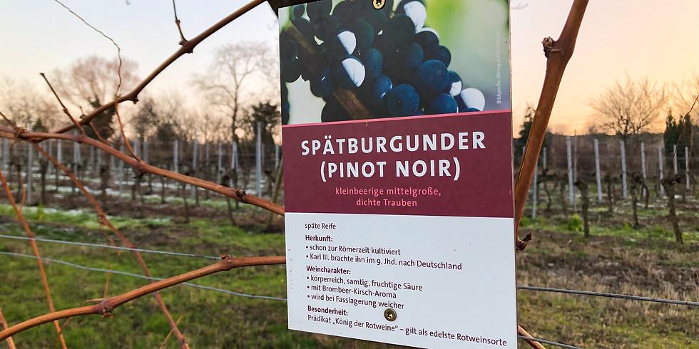 "Vinprovning tema ""Men, vá Pfalz!"""