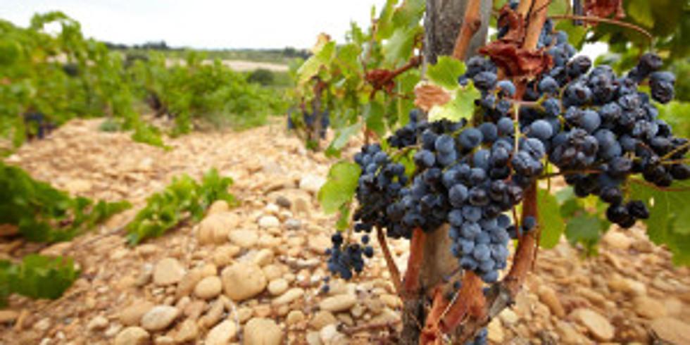 Vinprovning tema Rhônedalen!