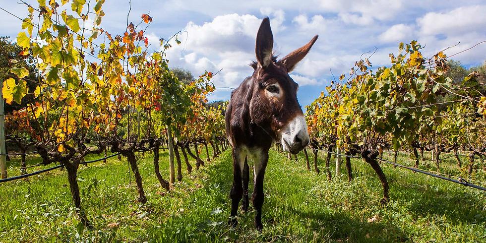 Vinprovningsmiddag i tema Mallorca