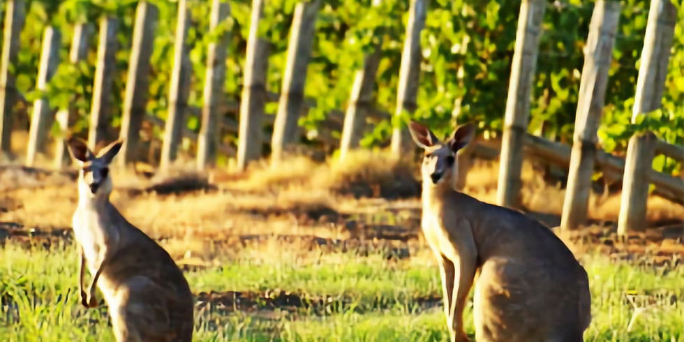"Vinprovning ""Det nya Australien"""