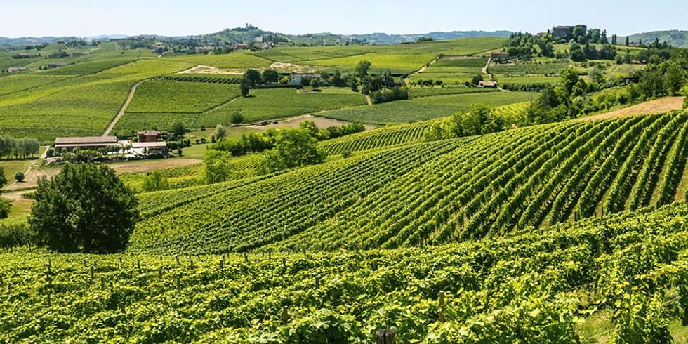 Vinprovning, tema Bourgogne!