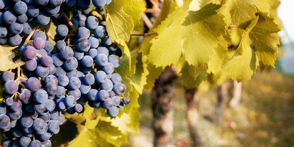 Vinprovning - Nebbiolo, norditaliens stolthet!