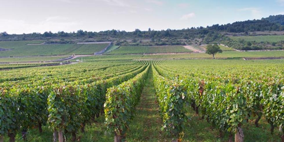 Vinprovning - Älskade Bourgogne
