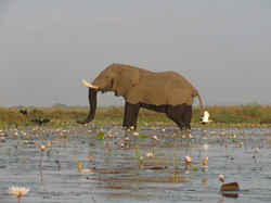 Ogavangodelta Botswana