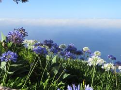 Madeira - bloemeneiland
