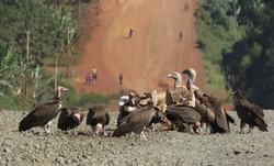 Gieren in Ethiopie
