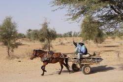 Palmarin - Senegal