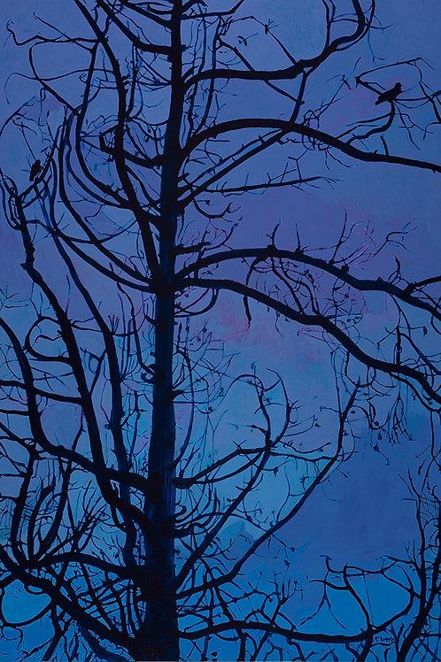 Petaluma Crows, 2019