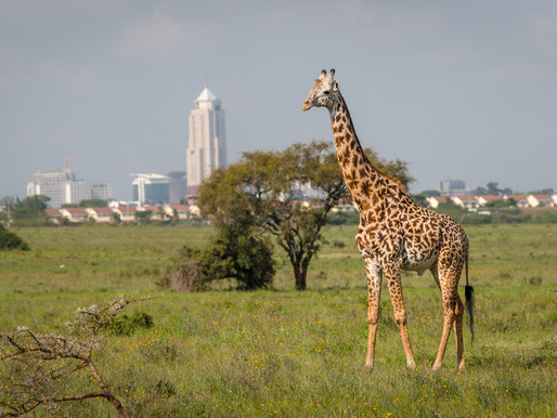 NAIROBI, the safari capital of Africa.