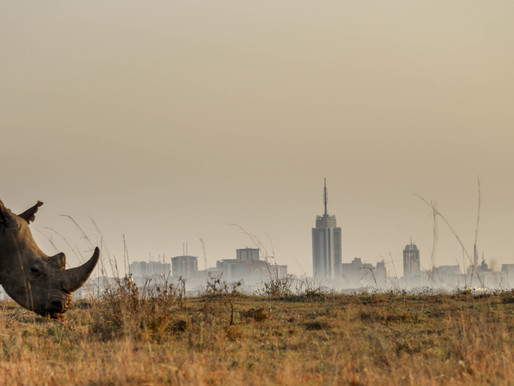 "NAIROBI NATIONAL PARK, ""The world's only wildlife capital"""