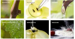 Caudalie Ingredients pic.png