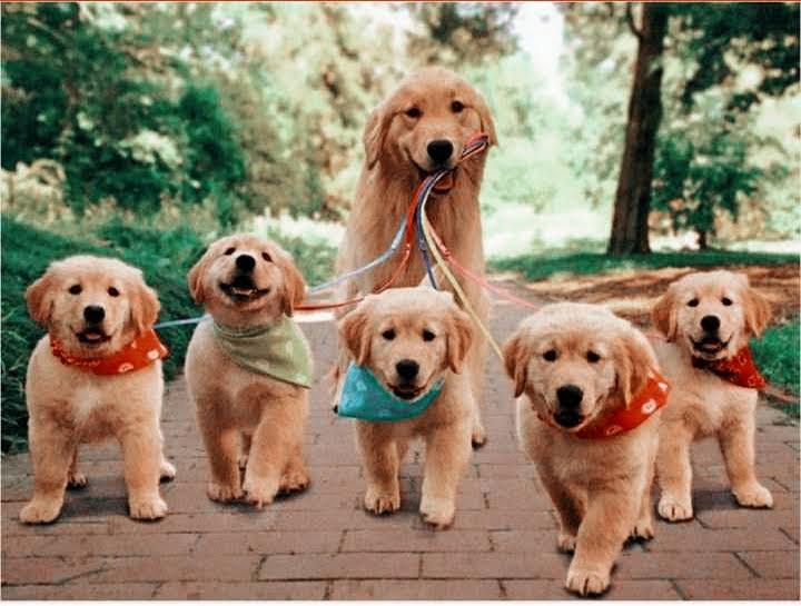 Short Doggy Walk