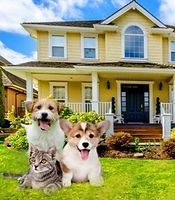 Dog-house-sitting_edited_edited.jpg
