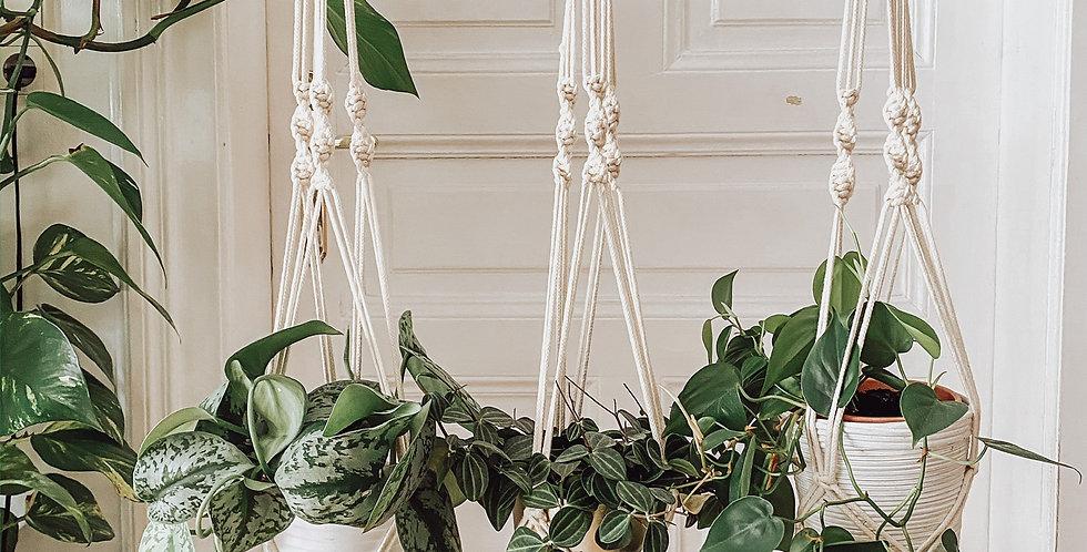 Makramee Pflanzenhänger