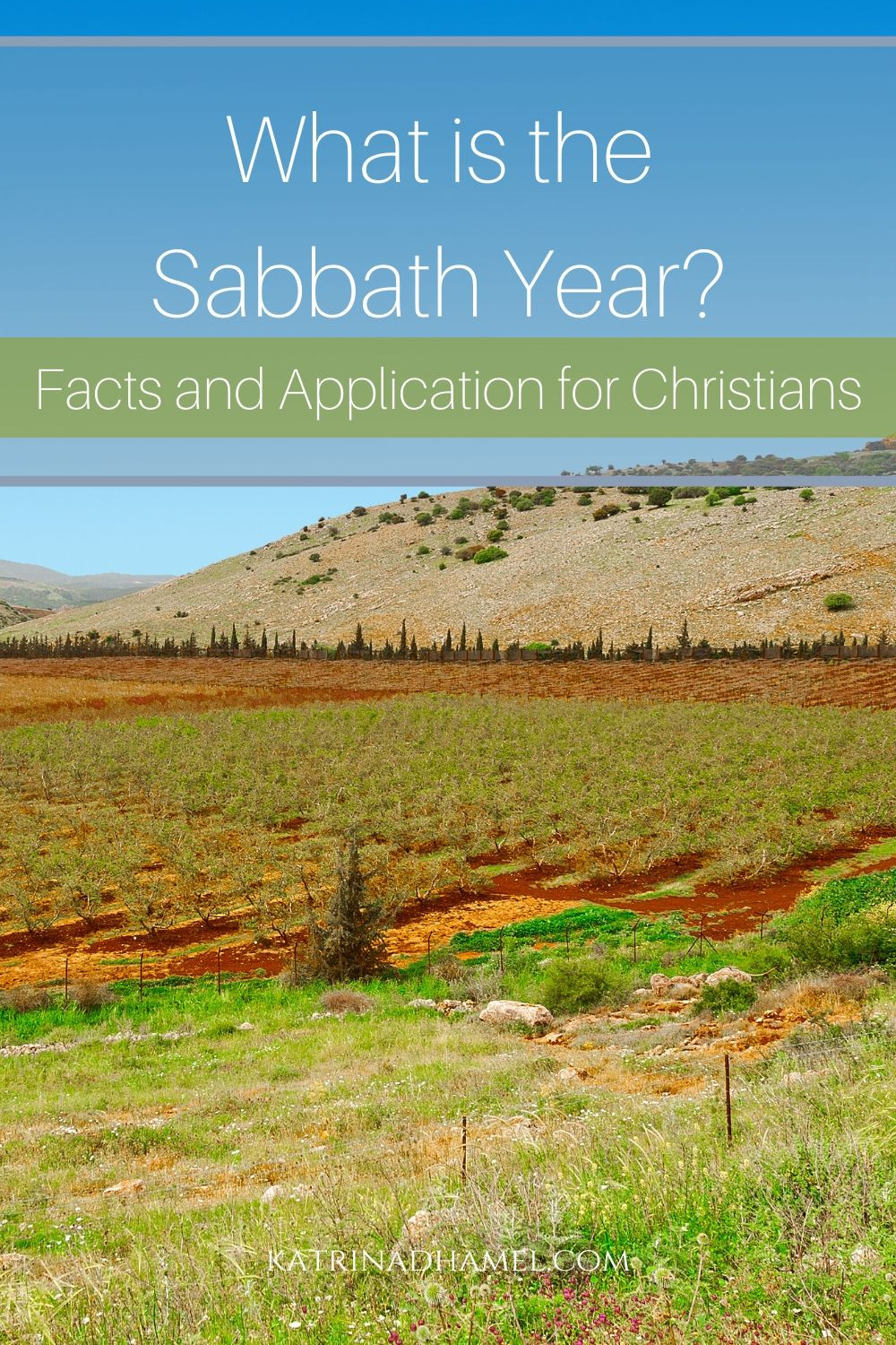 What is the Sabbath Year? Facts and Application for Christians on a background of a vineyard in Galilee